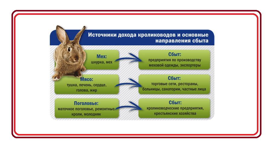 6585678 - Бизнес-план по разведению кроликов
