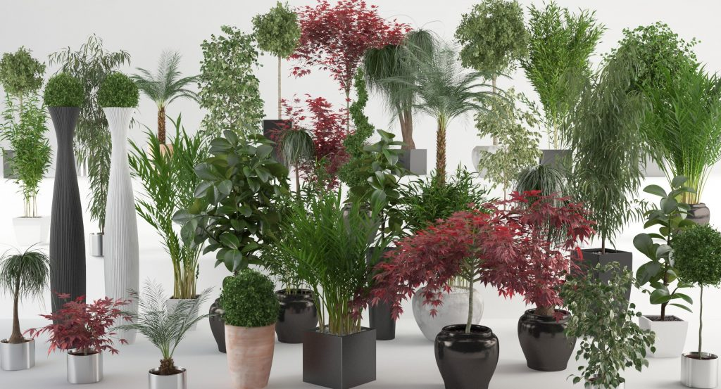 1401788770_vp-interior-plants-all