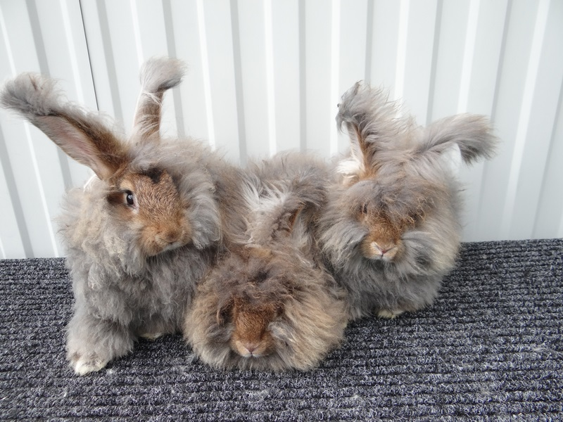 DSC09407 - Бизнес-план по разведению кроликов