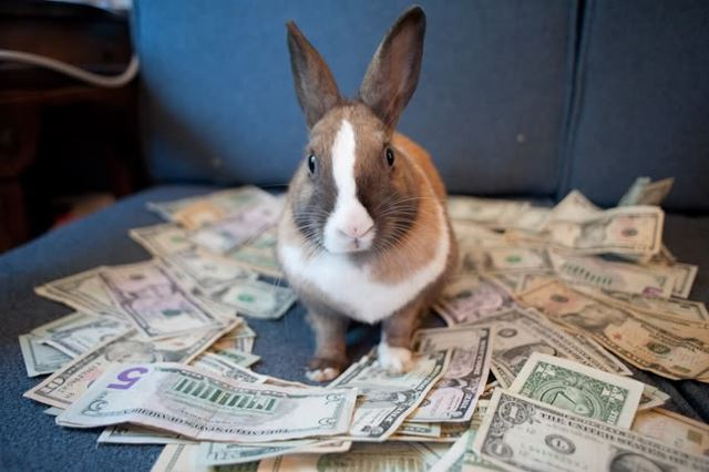 Finansyi Krolika 2016 - Бизнес-план по разведению кроликов