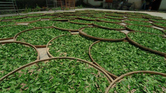 26213 153705000236 2 - Чайный бизнес - прибыльное дело!