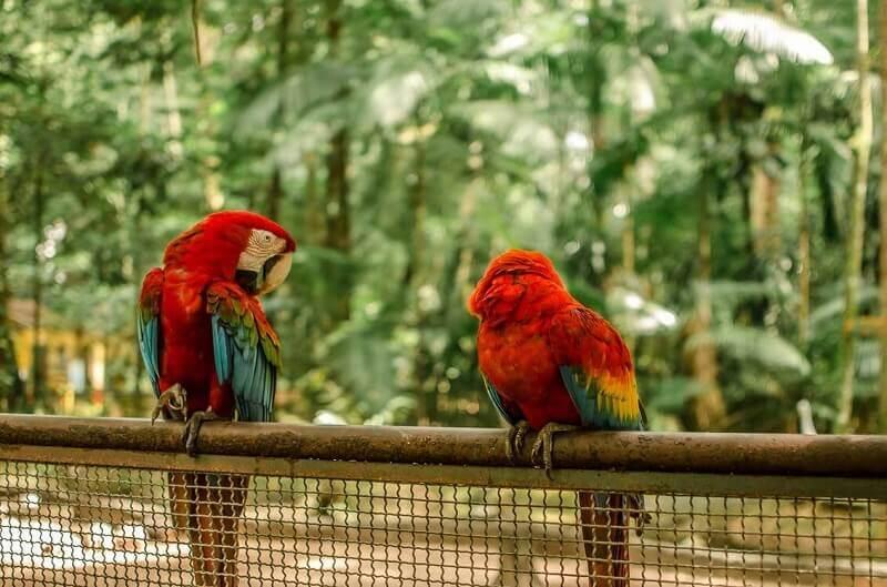 pexels photo 2013805 1 - Разведение попугаев в домашних условиях - 7 особенностей бизнеса