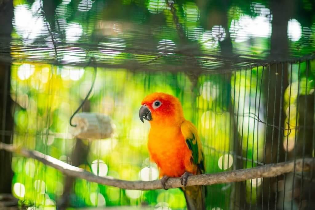 pexels photo 2289387 1024x683 - Разведение попугаев в домашних условиях - 7 особенностей бизнеса