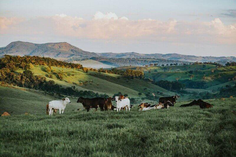 Преимущества и недостатки бизнеса на разведении бычков на мясо