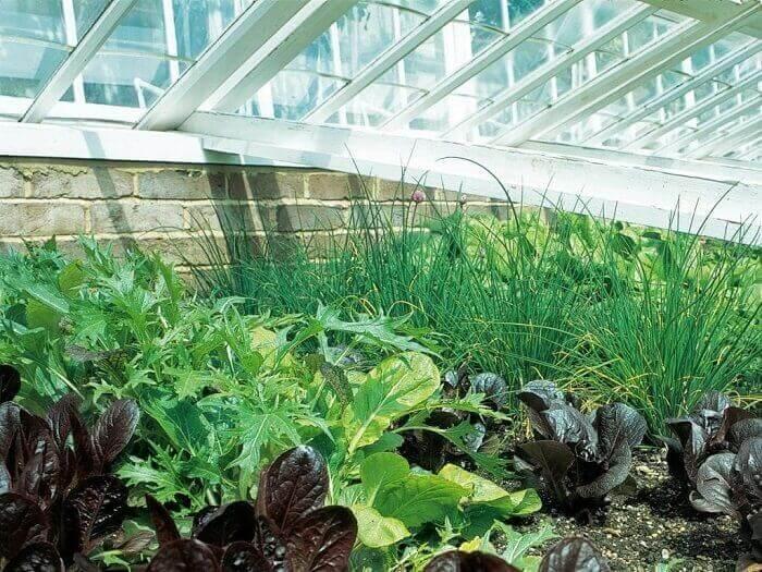 greenhouse 04 1 1 - Выращивание зелени на продажу как бизнес