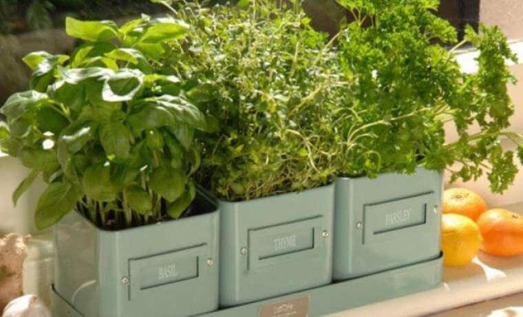 zelen - Выращивание зелени на продажу как бизнес