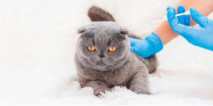 8 - Разведение породистых кошек как бизнес