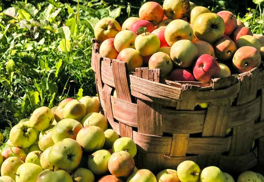 fruit chips3 - Бизнес-идея фруктовые чипсы